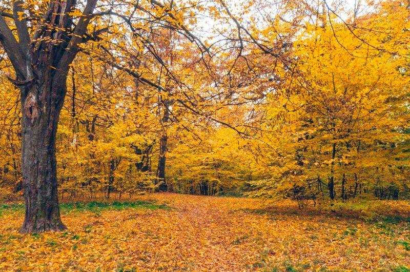 Осенний Сырецкий Гай