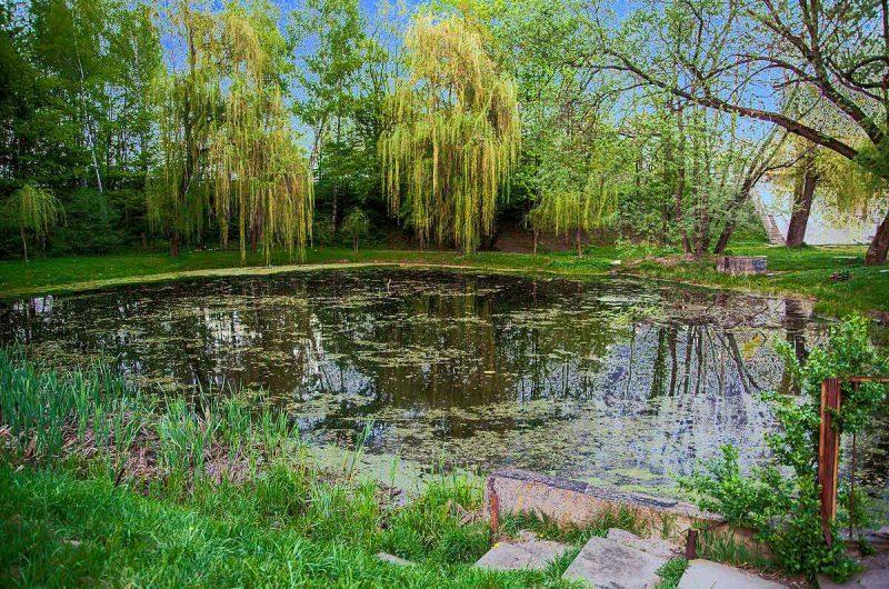 Ивы у озера в Сырецком Гаю