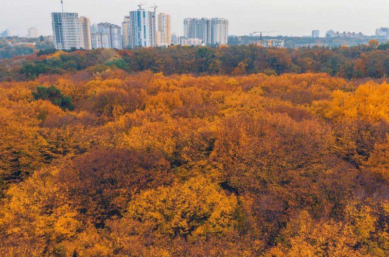 Осень в Сырецком Гаю