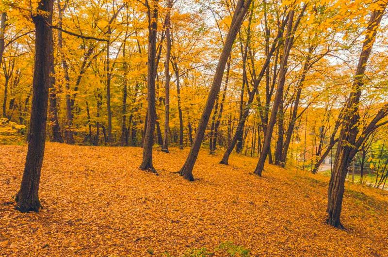 """Осень в парке """"Дубки"""" в Киеве"""