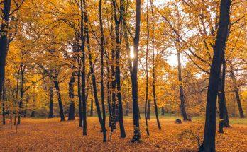 Золотая природа Сырецкой Рощи
