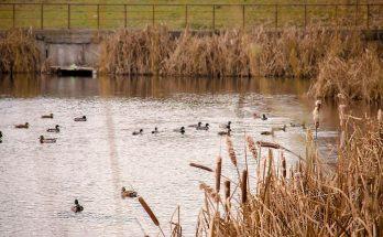 Утки в озере парка Кинь-Грусть