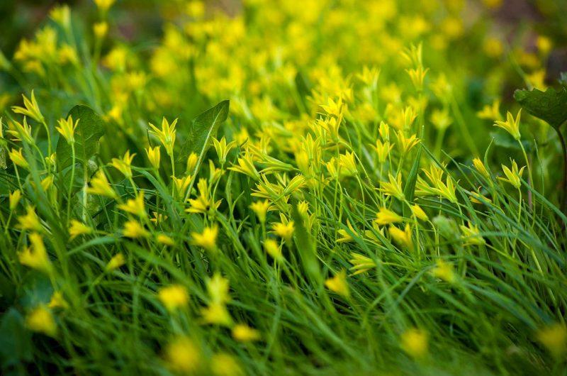 Растения в столичном парке «Победа» на Дарнице