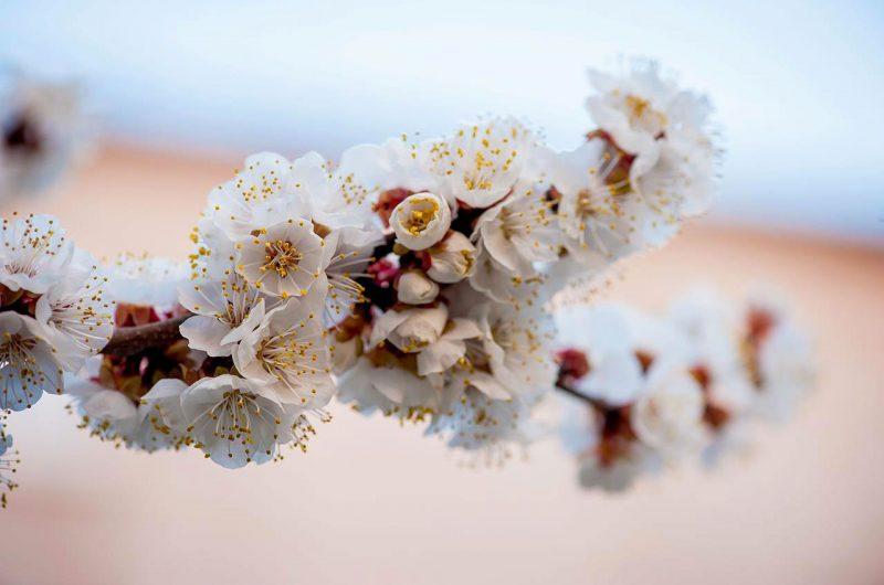 Весна в парке Победы в Киеве
