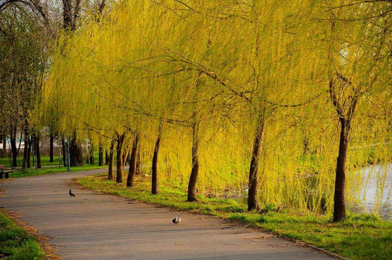 """Золотая осень в парке """"Победа"""" в городе Киев"""