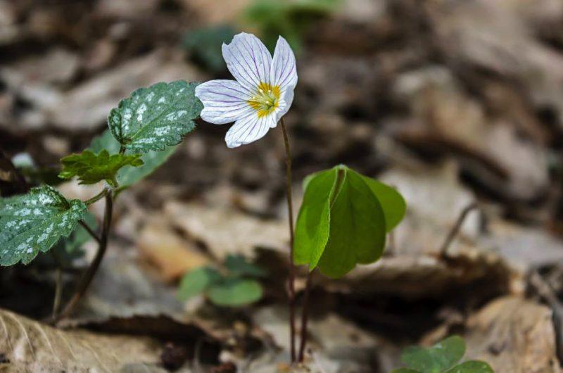 """Весенние цветы в парке """"Пуща-Водица"""""""