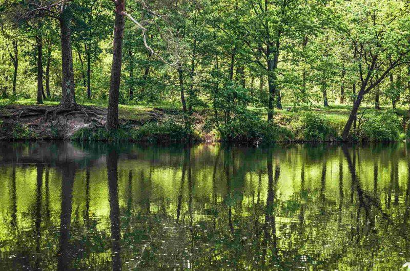 Живописная природа Пущи-Водицы