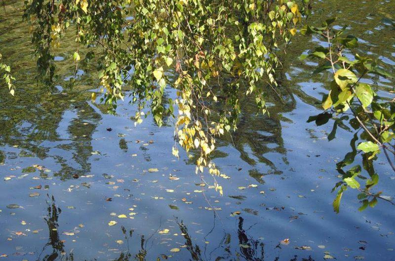 Деревья у озера в Пуще-Водице в городе Киев