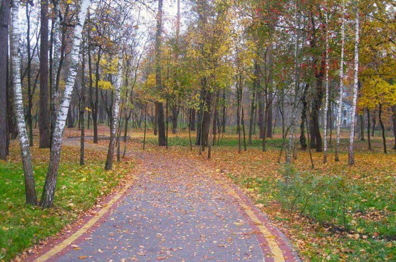 Дорожка Пущи-Водицы, усыпанная осенними листьями