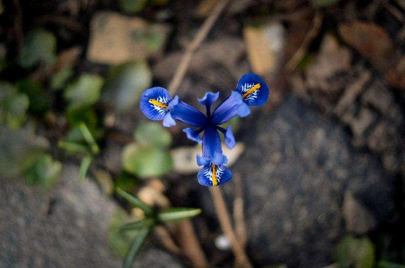"""Весенние цветы в парке """"Аскольдова могила"""""""