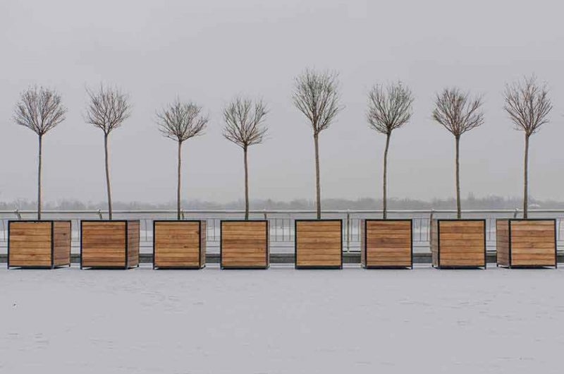 Деревья Почтовой площади в атмосфере зимы